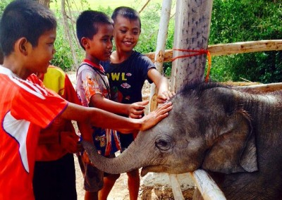 ELEPHANTS,-TEACHING,-CHILDCARE-AND-MEDICAL-IN-SURIN-(14)