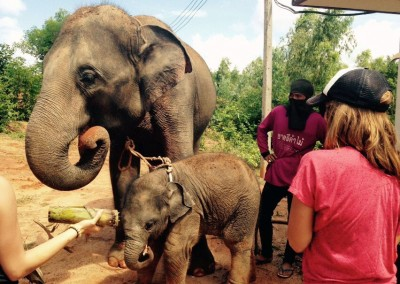 ELEPHANTS,-TEACHING,-CHILDCARE-AND-MEDICAL-IN-SURIN-(22)