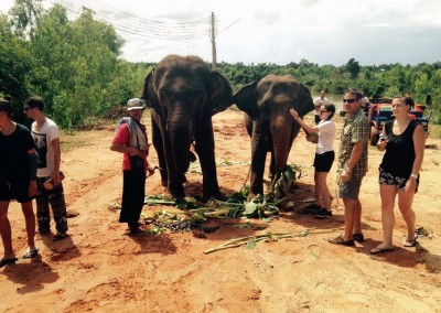 ELEPHANTS,-TEACHING,-CHILDCARE-AND-MEDICAL-IN-SURIN-(24)