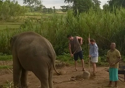 ELEPHANTS,-TEACHING,-CHILDCARE-AND-MEDICAL-IN-SURIN-(30)
