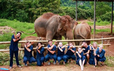 Local Small Business Suppliers: Mae Wang Elephant Home Case Study